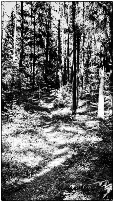 skogskugga8-1