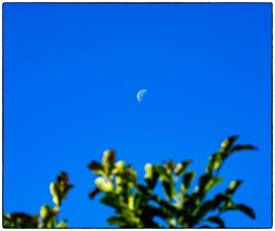 dagmåne