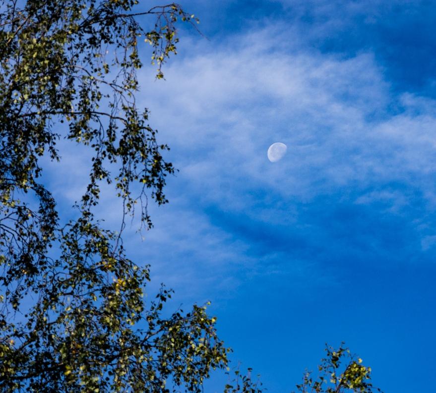 dagmåne (1 av 1)